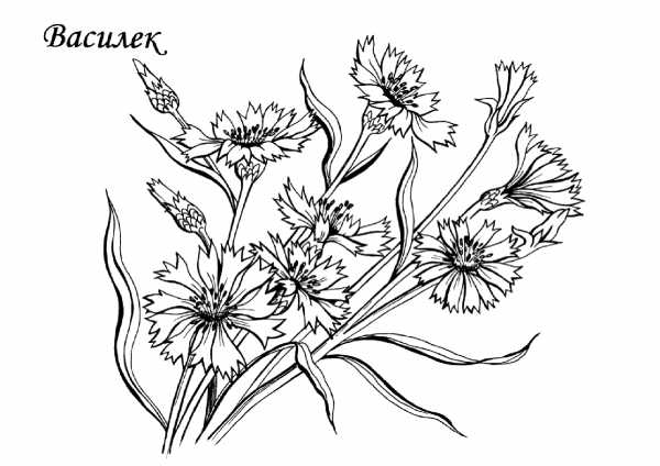Раскраска цветок для малышей. Раскраски для маленьких ...