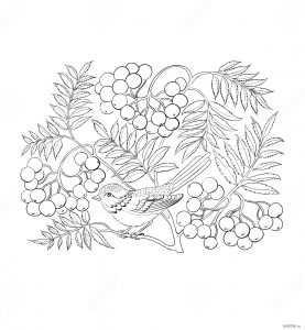 Раскраска осень рябина. Учимся поэтапно рисовать осеннюю ...