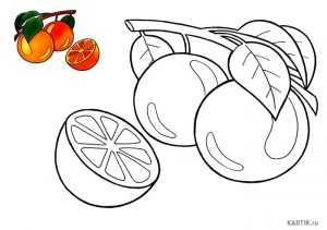 Раскраски апельсин. Онлайн раскраска апельсин